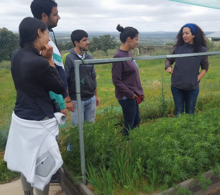 Guided tour for adult visitors through the experiments in agroecology conducted at the common garden of the Aprisco de Las Corchuelas