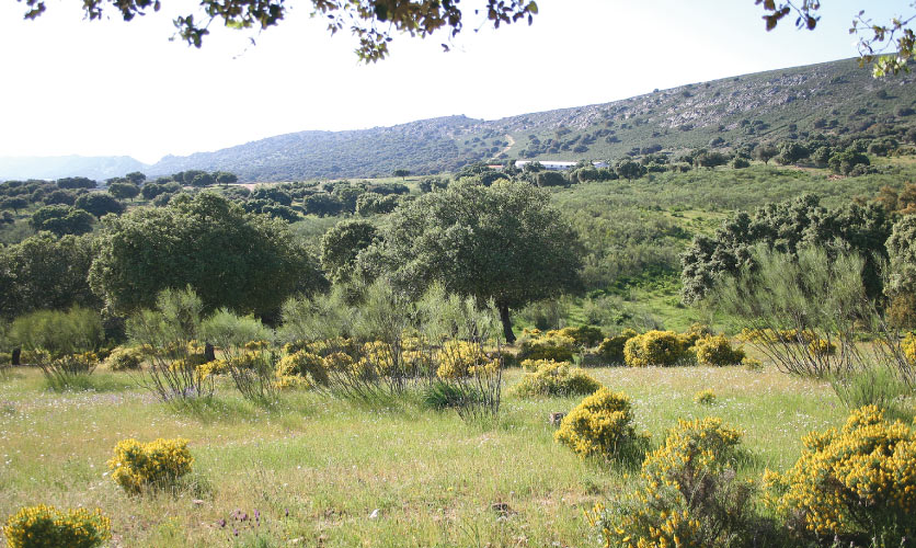 The research station of the Aprisco de Las Corchuelas and all the activities run by the association are located on the farm Las Corchuelas. The farm is characterised by over 100 hectares of dehesa and directly adjacent to the Monfragüe National Park